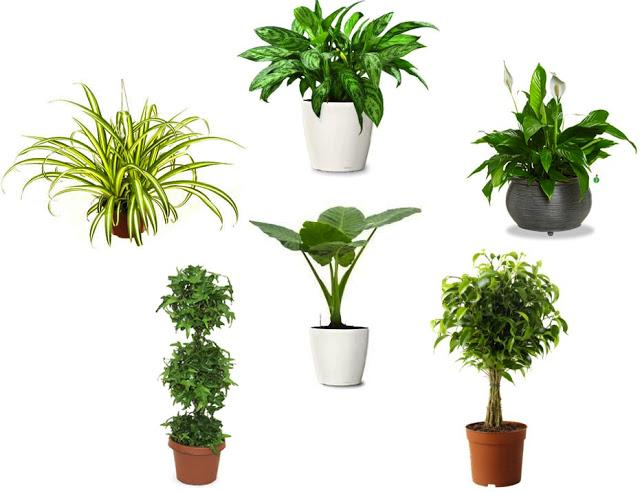 the  best plants to grow indoors for our health.  how you living?, Natural flower